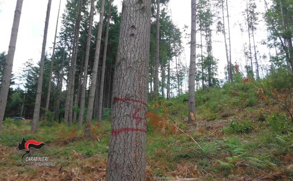 Taglio abusivo su quasi sei ettari di bosco a Motta Santa Lucia, una ...