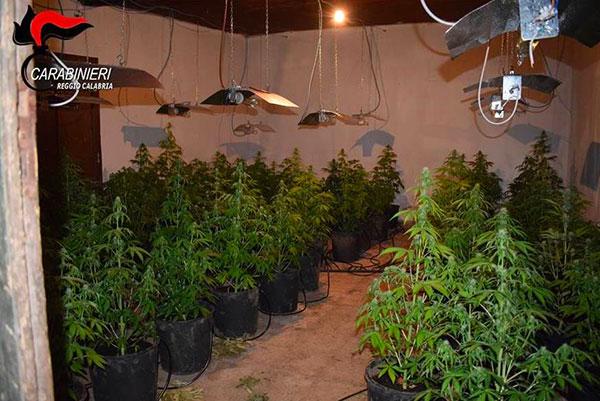 marijuana_piantagione.jpg